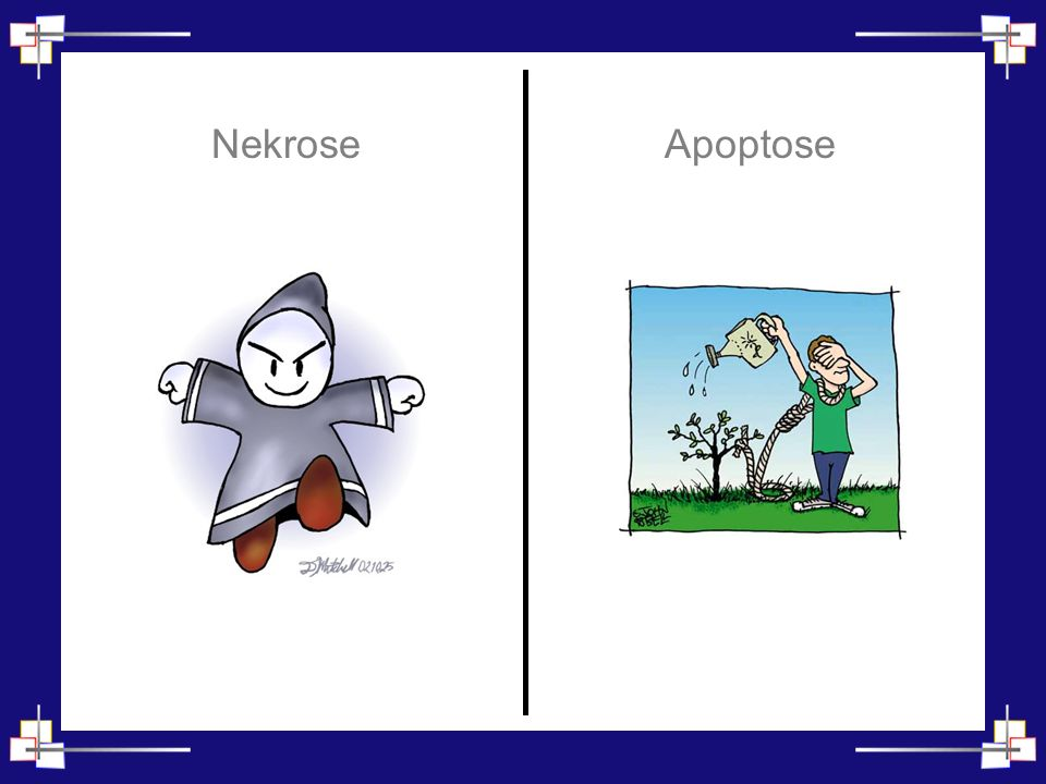 Hypothermie Nekrose Apoptose