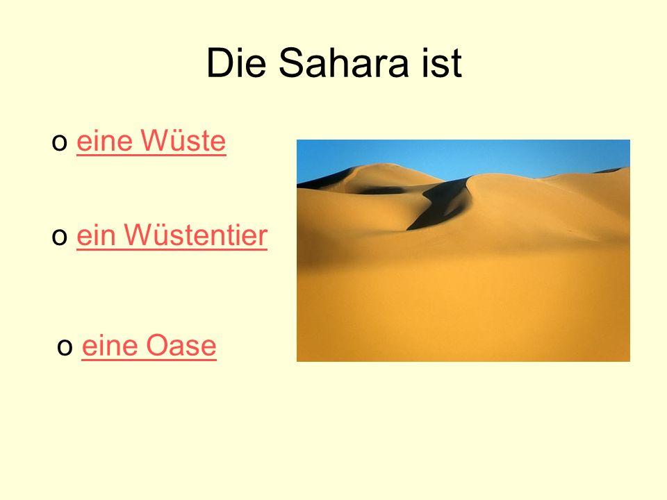 Die Sahara ist eine Wüste ein Wüstentier eine Oase