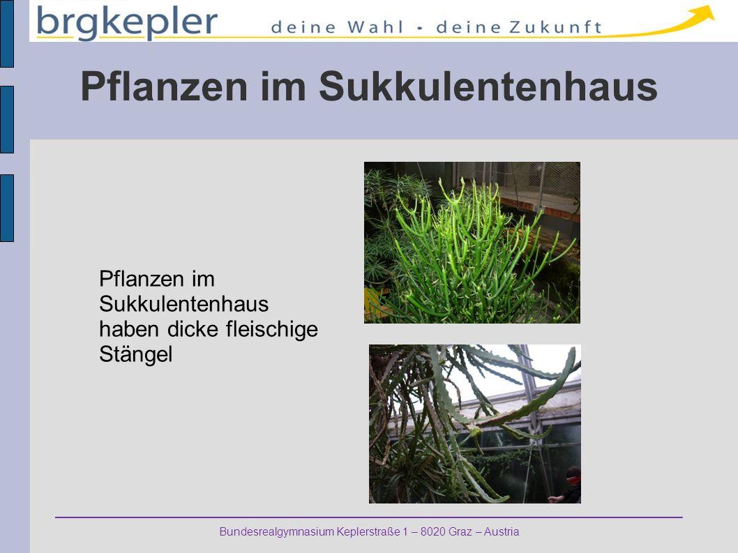 Pflanzen im Sukkulentenhaus