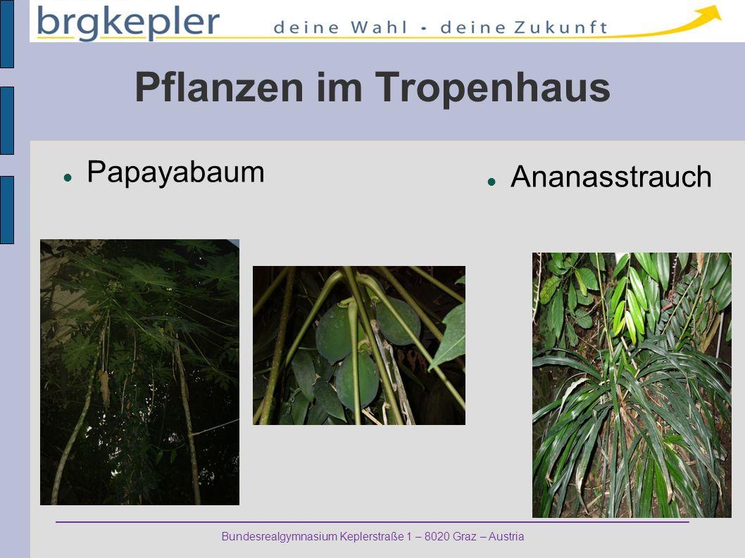 Pflanzen im Tropenhaus