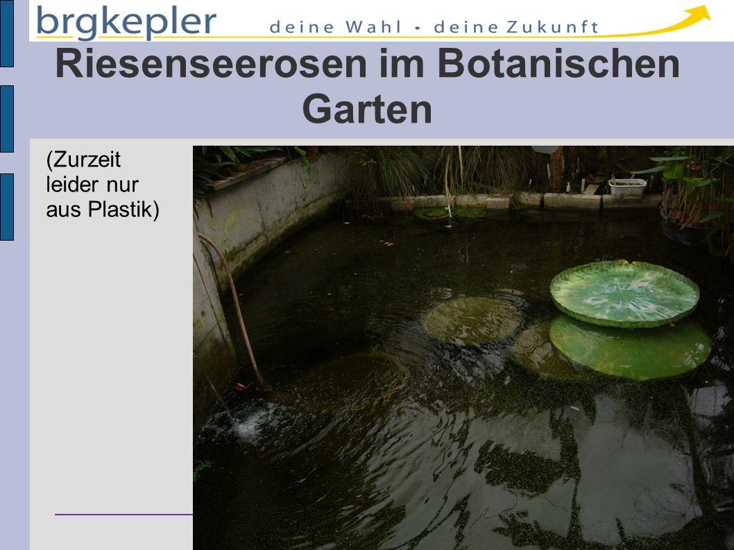 Riesenseerosen im Botanischen Garten