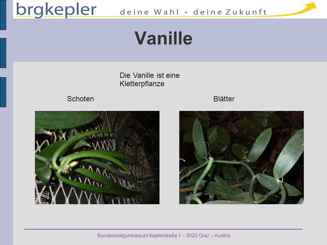 Vanille Die Vanille ist eine Kletterpflanze Schoten Blätter