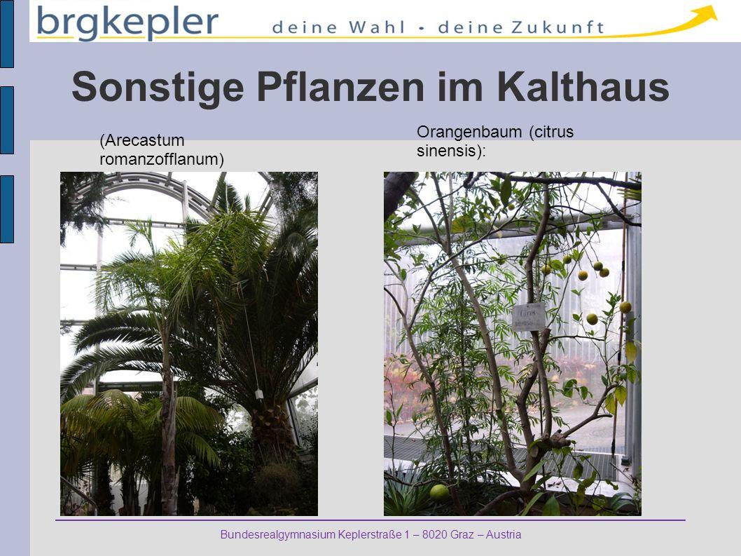 Sonstige Pflanzen im Kalthaus