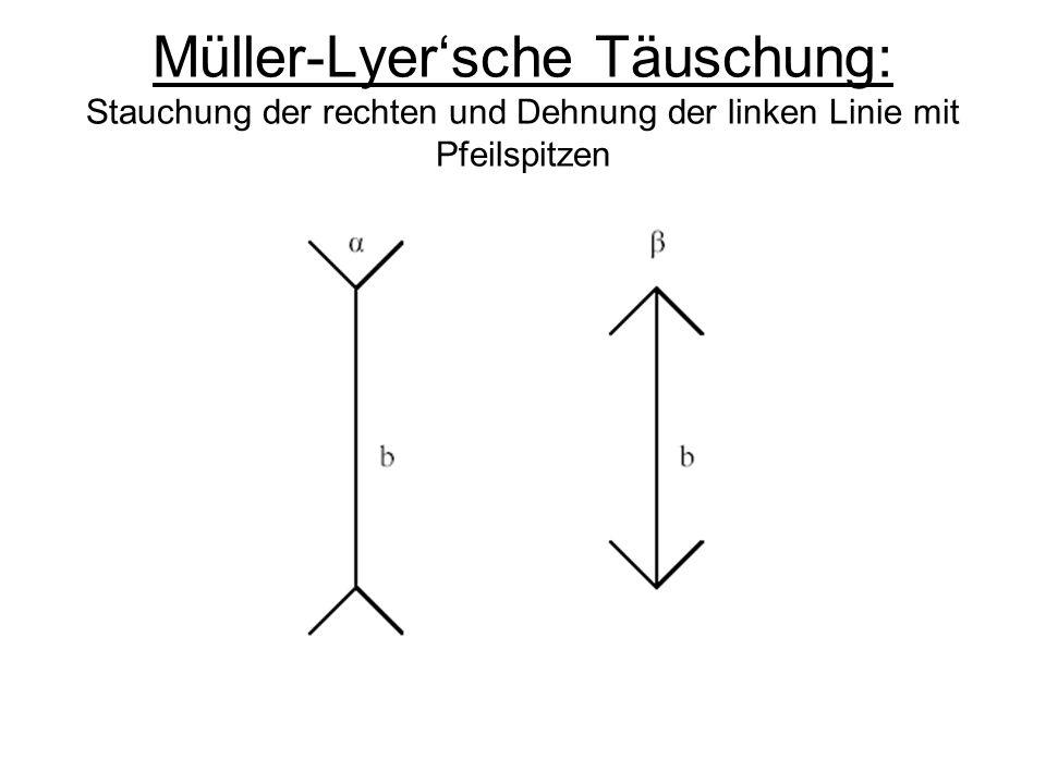 Müller-Lyer'sche Täuschung: Stauchung der rechten und Dehnung der linken Linie mit Pfeilspitzen