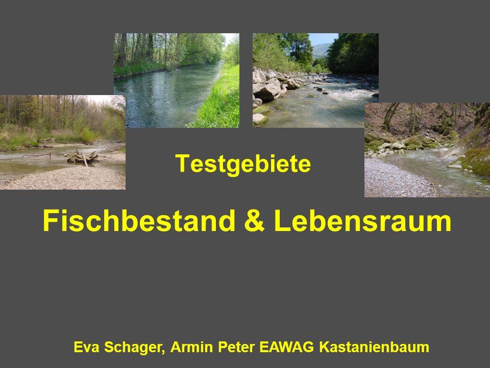 Fischbestand & Lebensraum Eva Schager, Armin Peter EAWAG Kastanienbaum