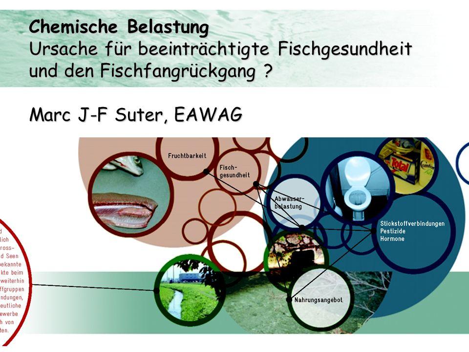 Chemische Belastung Ursache für beeinträchtigte Fischgesundheit.