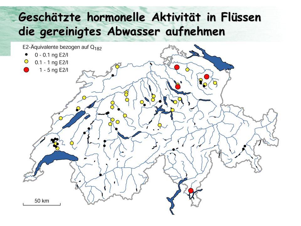 Geschätzte hormonelle Aktivität in Flüssen