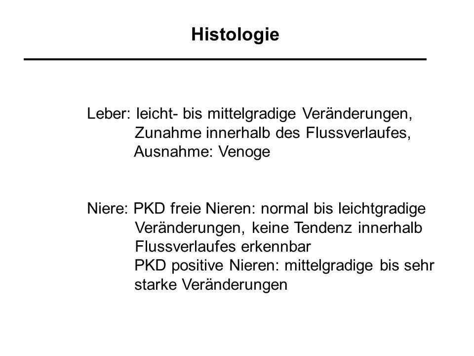 Histologie Leber: leicht- bis mittelgradige Veränderungen,