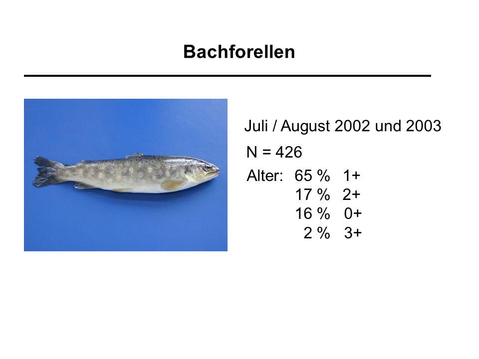 Bachforellen Juli / August 2002 und 2003 N = 426 Alter: 65 % 1+