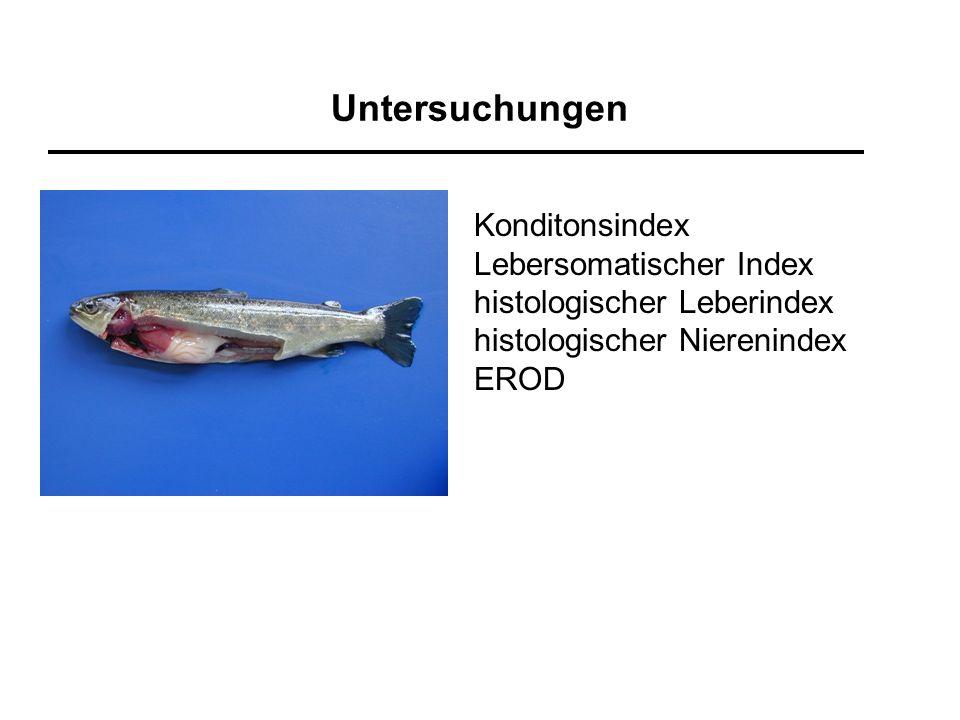 Untersuchungen Konditonsindex Lebersomatischer Index