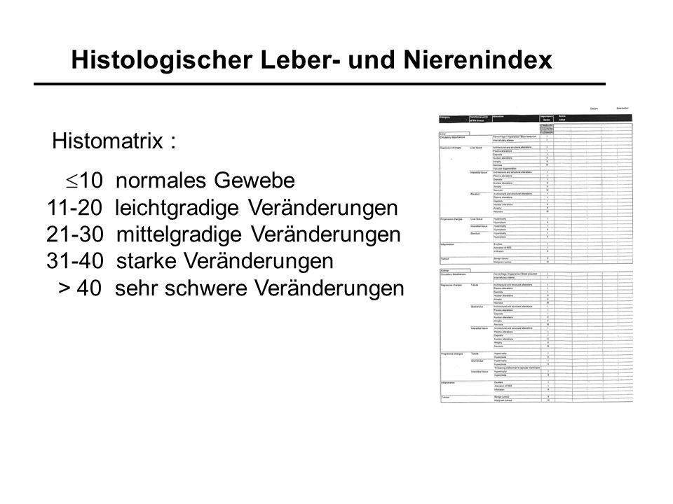 Histologischer Leber- und Nierenindex