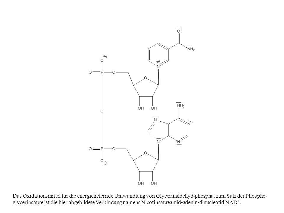 Das Oxidationsmittel für die energieliefernde Umwandlung von Glycerinaldehyd-phosphat zum Salz der Phospho-glycerinsäure ist die hier abgebildete Verbindung namens Nicotinsäureamid-adenin-dinucleotid NAD+.