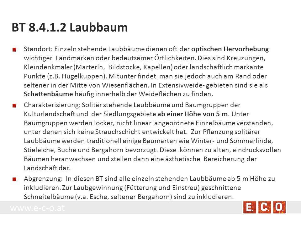 BT 8.4.1.2 Laubbaum