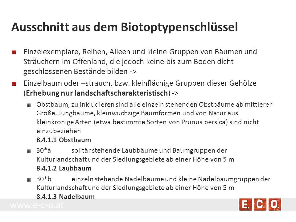 Ausschnitt aus dem Biotoptypenschlüssel