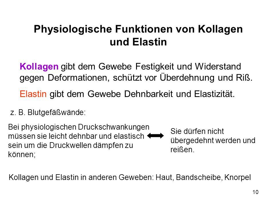 Physiologische Funktionen von Kollagen und Elastin