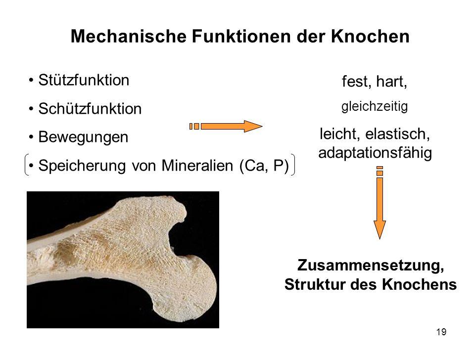 Mechanische Funktionen der Knochen