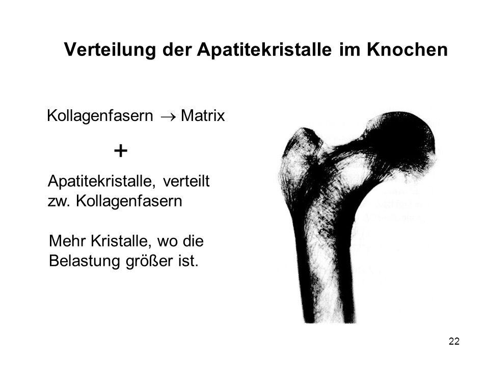 Verteilung der Apatitekristalle im Knochen