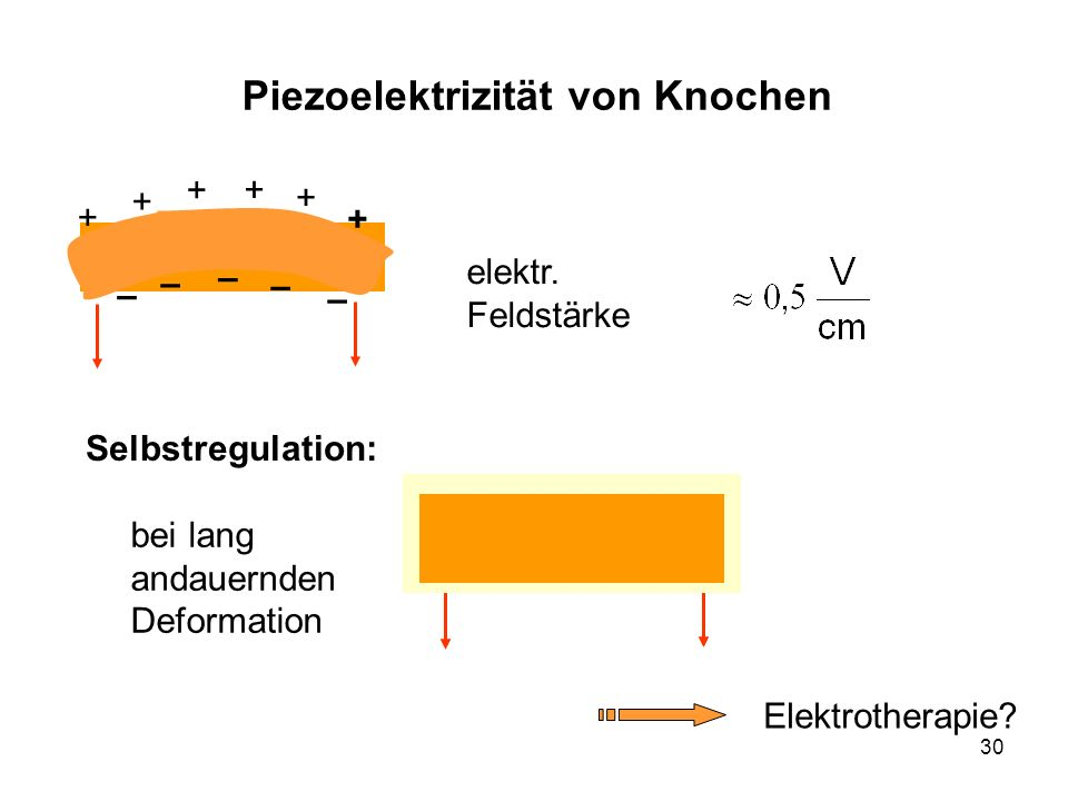 Piezoelektrizität von Knochen
