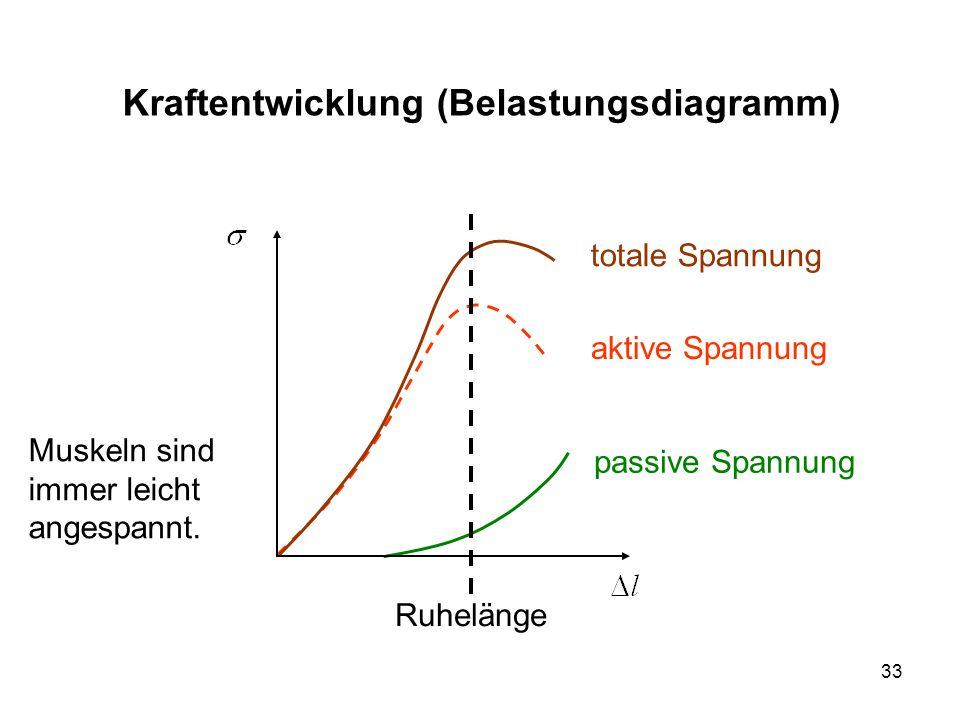 Kraftentwicklung (Belastungsdiagramm)