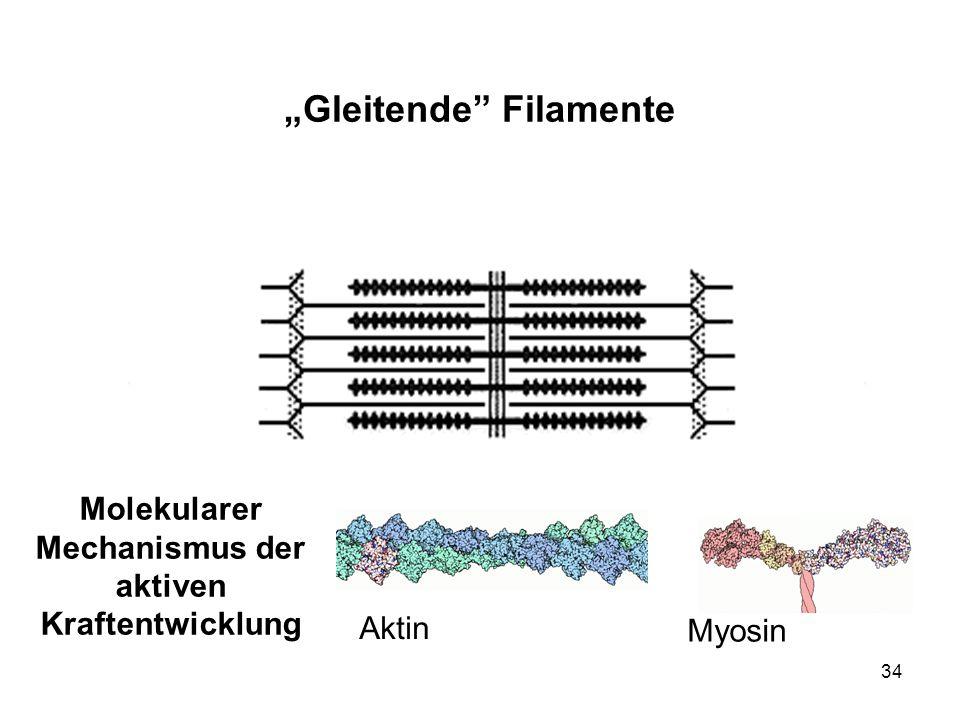 """Gleitende Filamente"