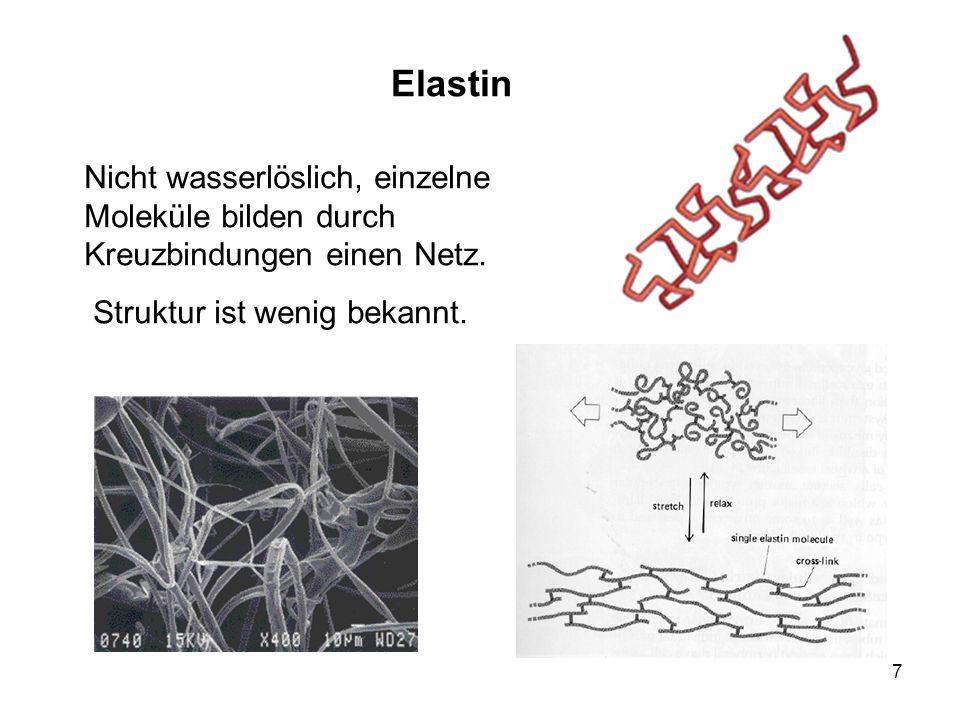 Elastin Nicht wasserlöslich, einzelne Moleküle bilden durch Kreuzbindungen einen Netz.