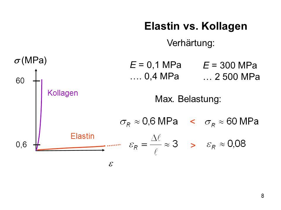Elastin vs. Kollagen Verhärtung: s (MPa) E = 0,1 MPa …. 0,4 MPa