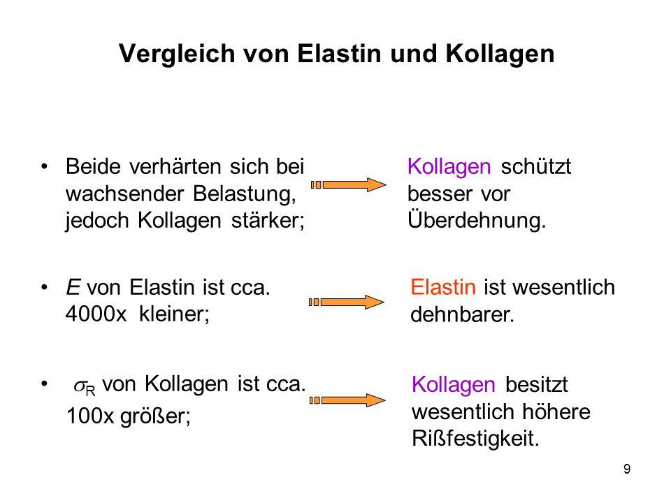 Vergleich von Elastin und Kollagen