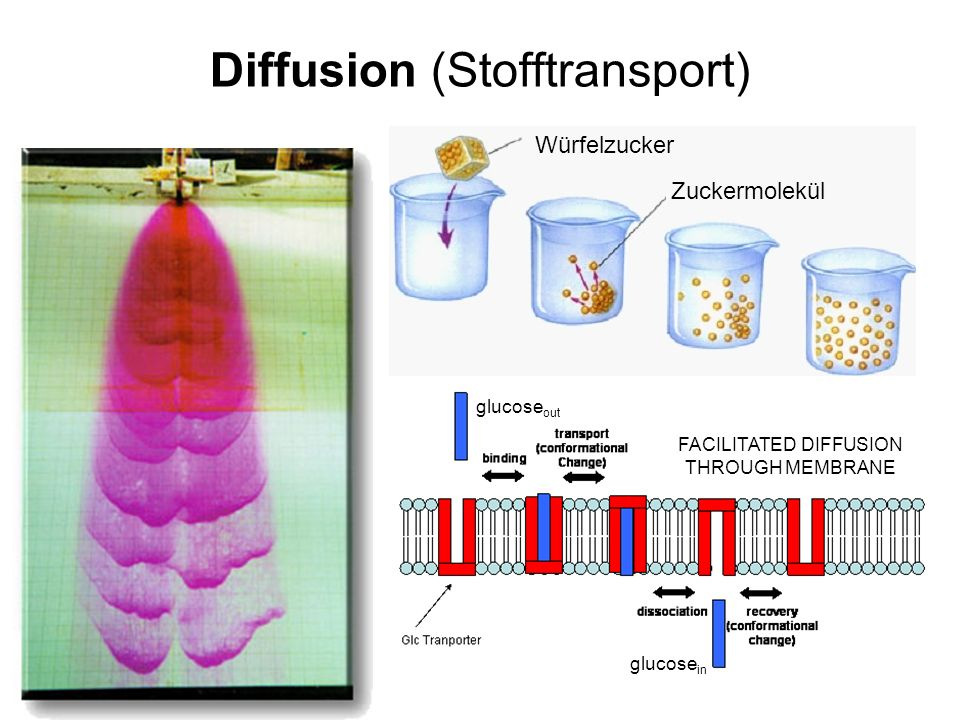 Diffusion (Stofftransport)