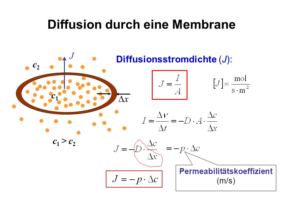 Diffusion durch eine Membrane