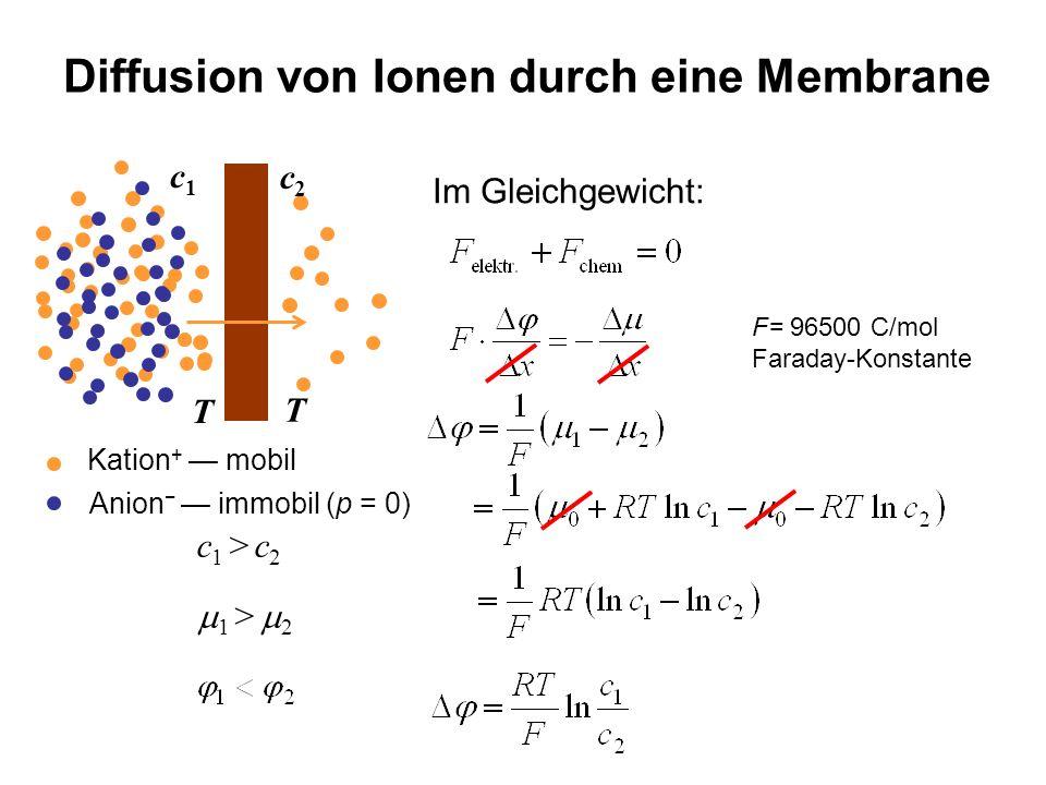 Diffusion von Ionen durch eine Membrane