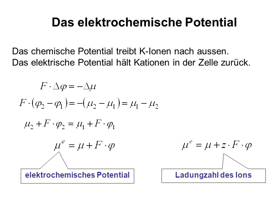 Das elektrochemische Potential