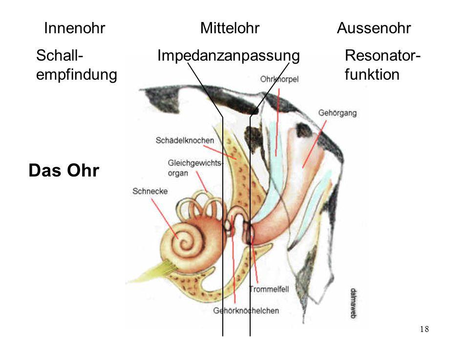 Tolle Menschliche Innenohr Anatomie Zeitgenössisch - Anatomie Ideen ...