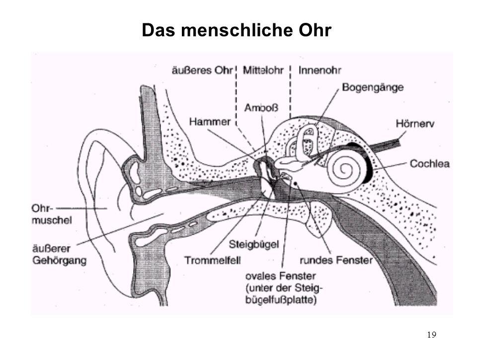 Das menschliche Ohr