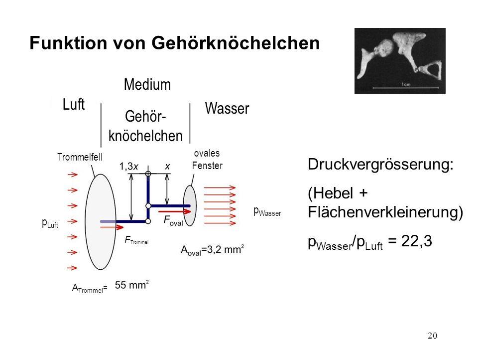 Funktion von Gehörknöchelchen