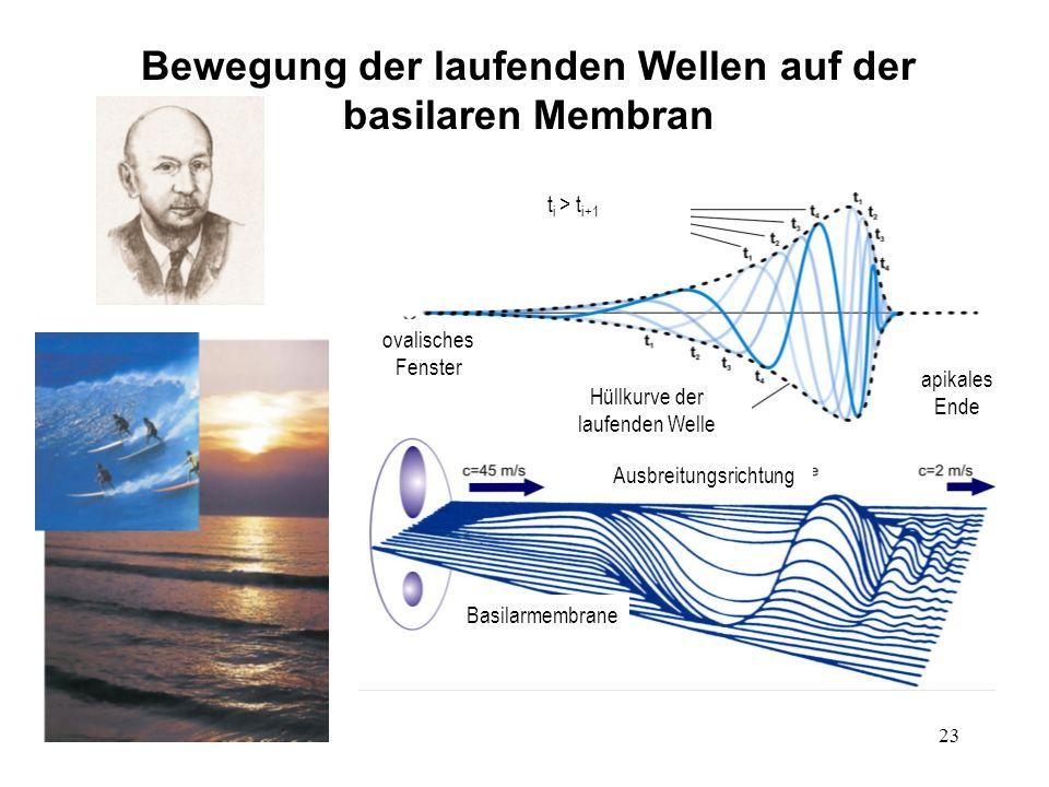 Bewegung der laufenden Wellen auf der basilaren Membran