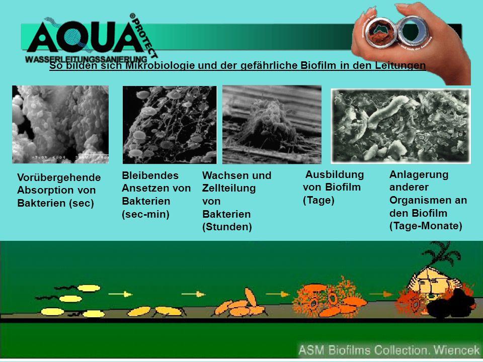 So bilden sich Mikrobiologie und der gefährliche Biofilm in den Leitungen