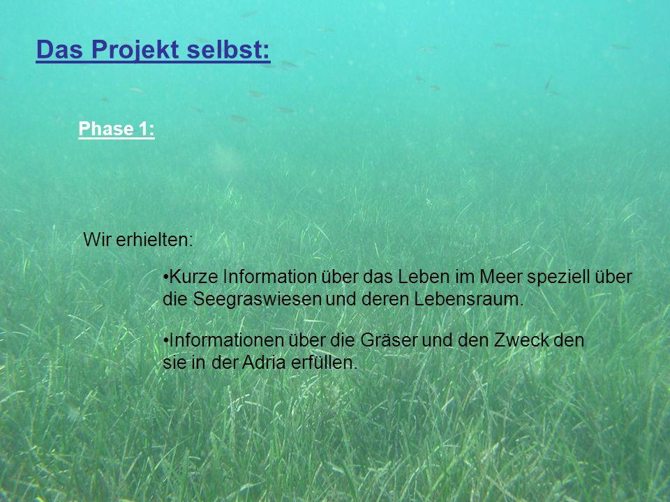 Das Projekt selbst: Phase 1: Wir erhielten: