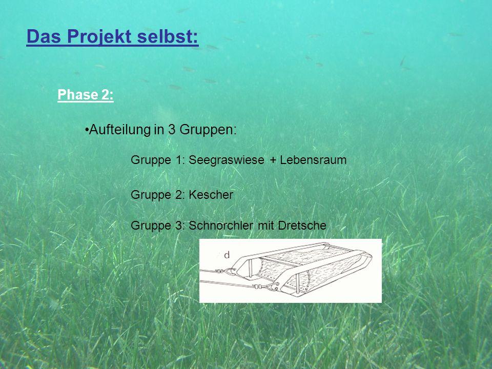 Das Projekt selbst: Phase 2: Aufteilung in 3 Gruppen: