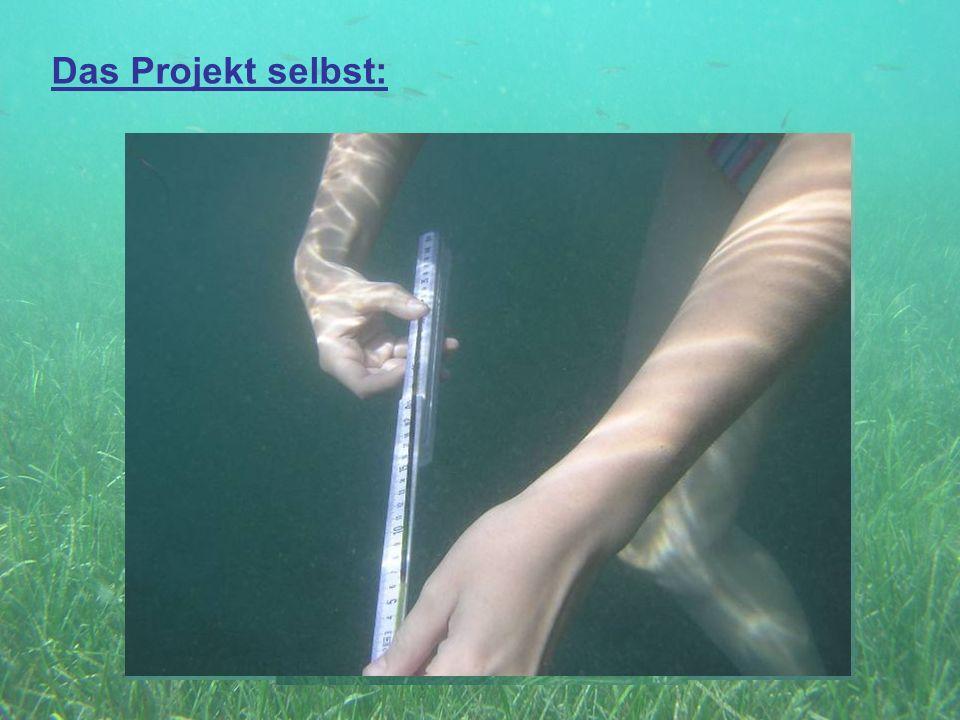 Das Projekt selbst: Gruppe 1: Seegraswiese + Lebensraum Aufgaben: