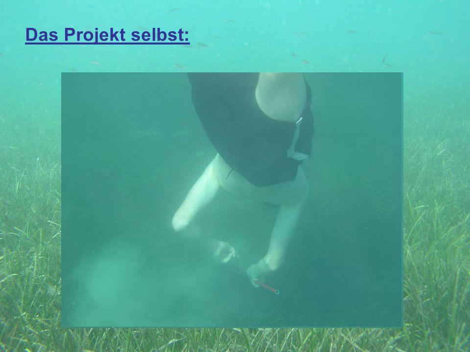 Das Projekt selbst: Gruppe 2: Kescher: Aufgaben: