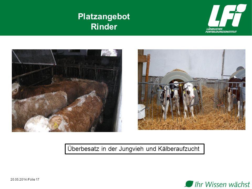 Platzangebot Rinder Überbesatz in der Jungvieh und Kälberaufzucht