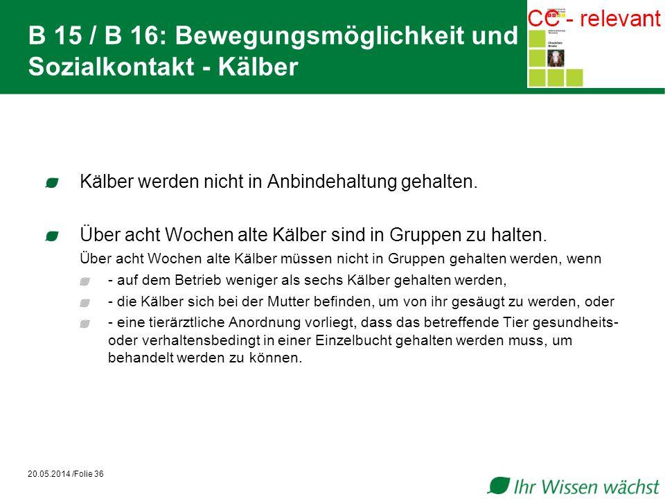 B 15 / B 16: Bewegungsmöglichkeit und Sozialkontakt - Kälber