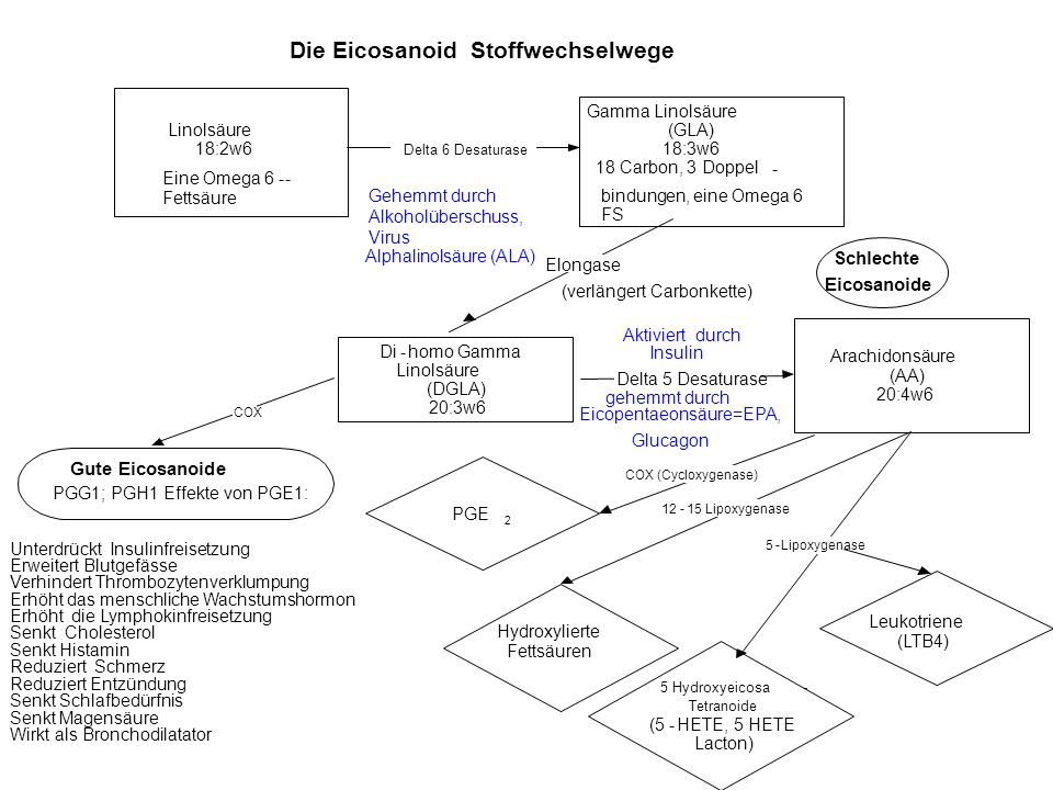 Die Eicosanoid Stoffwechselwege