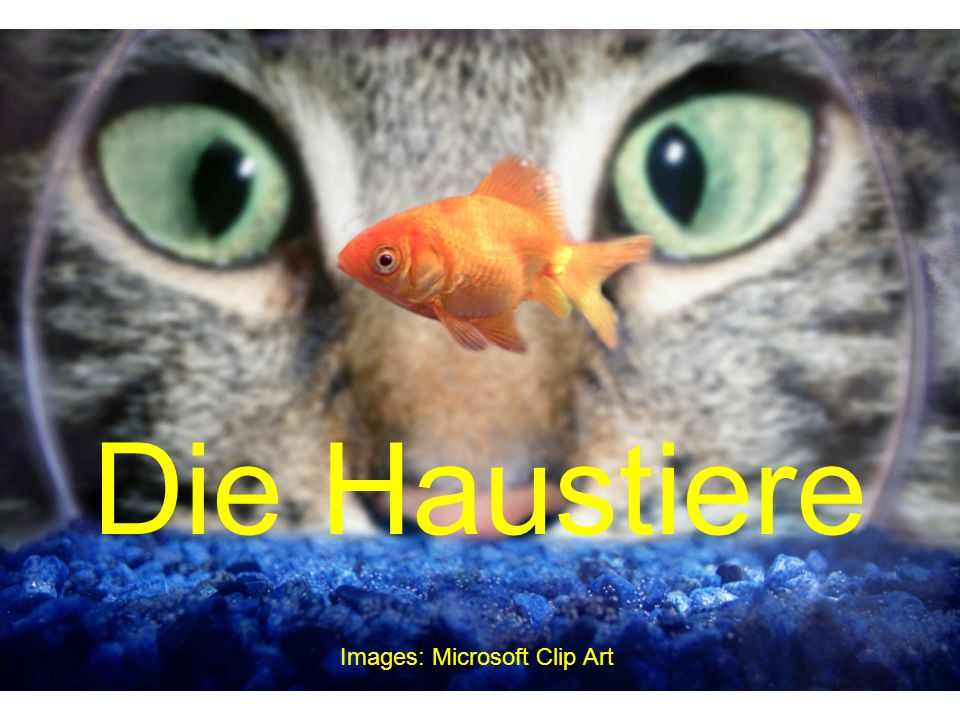 Die Haustiere Images: Microsoft Clip Art