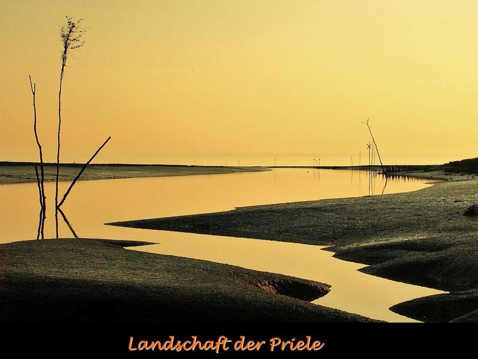 Landschaft der Priele