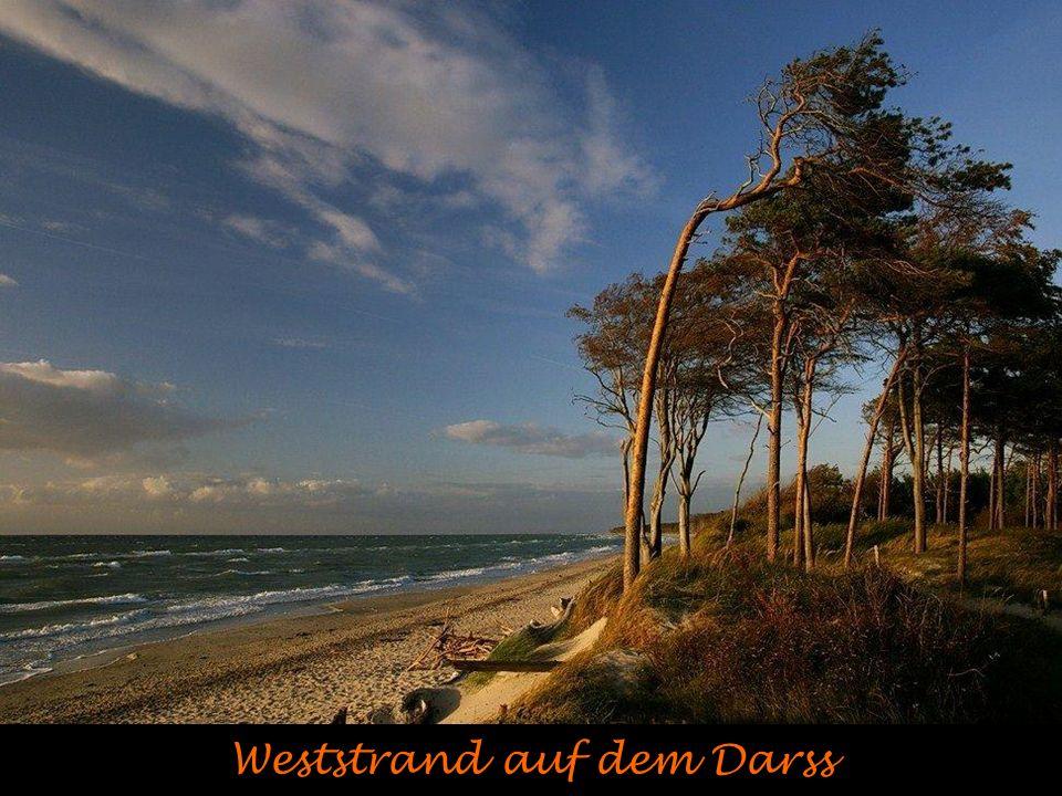 Weststrand auf dem Darss