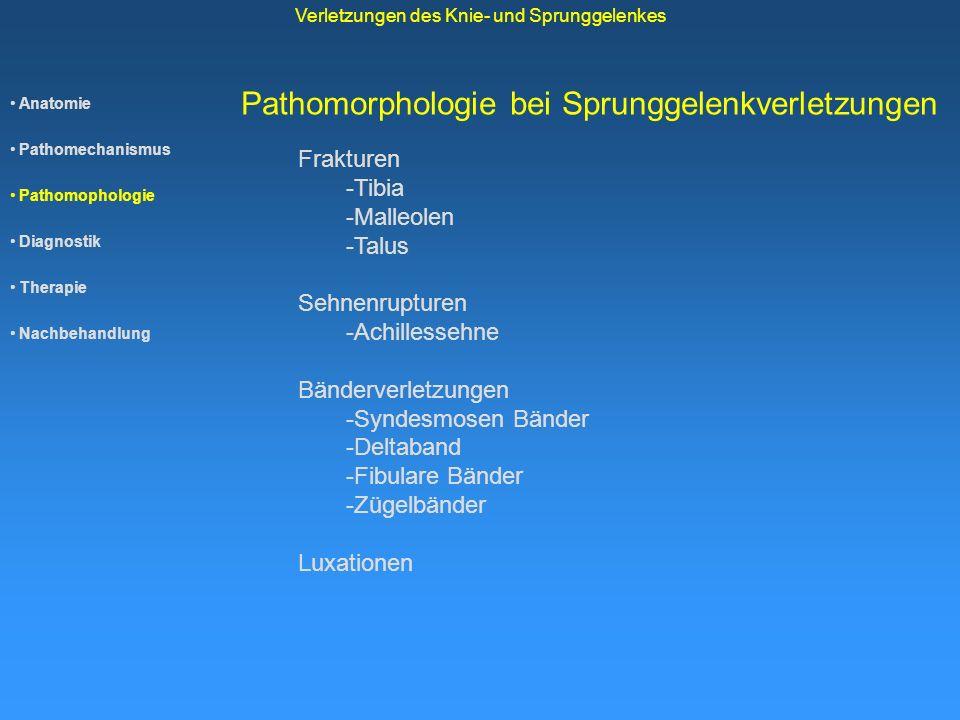 Pathomorphologie bei Sprunggelenkverletzungen