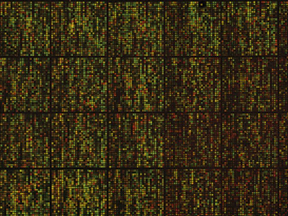http://mednews.stanford.edu/stanmed/2005fall/microarray.html http://ifomis.org
