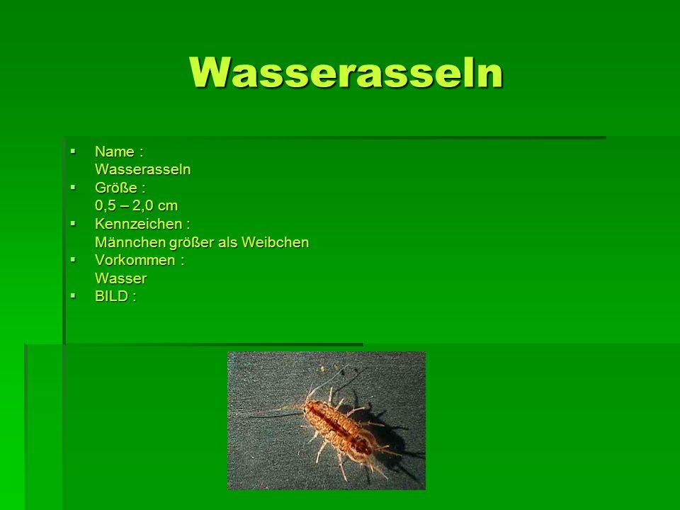 Wasserasseln Name : Wasserasseln Größe : 0,5 – 2,0 cm Kennzeichen :