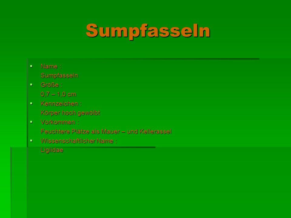 Sumpfasseln Name : Sumpfasseln Größe : 0,7 – 1,0 cm Kennzeichen :